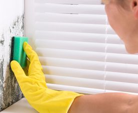 Woman in rubber gloves using a sponge to clean mold off a wall